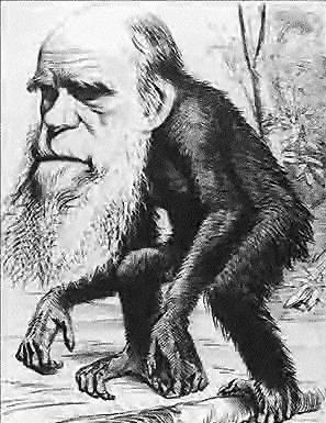 Darwin_ape_3